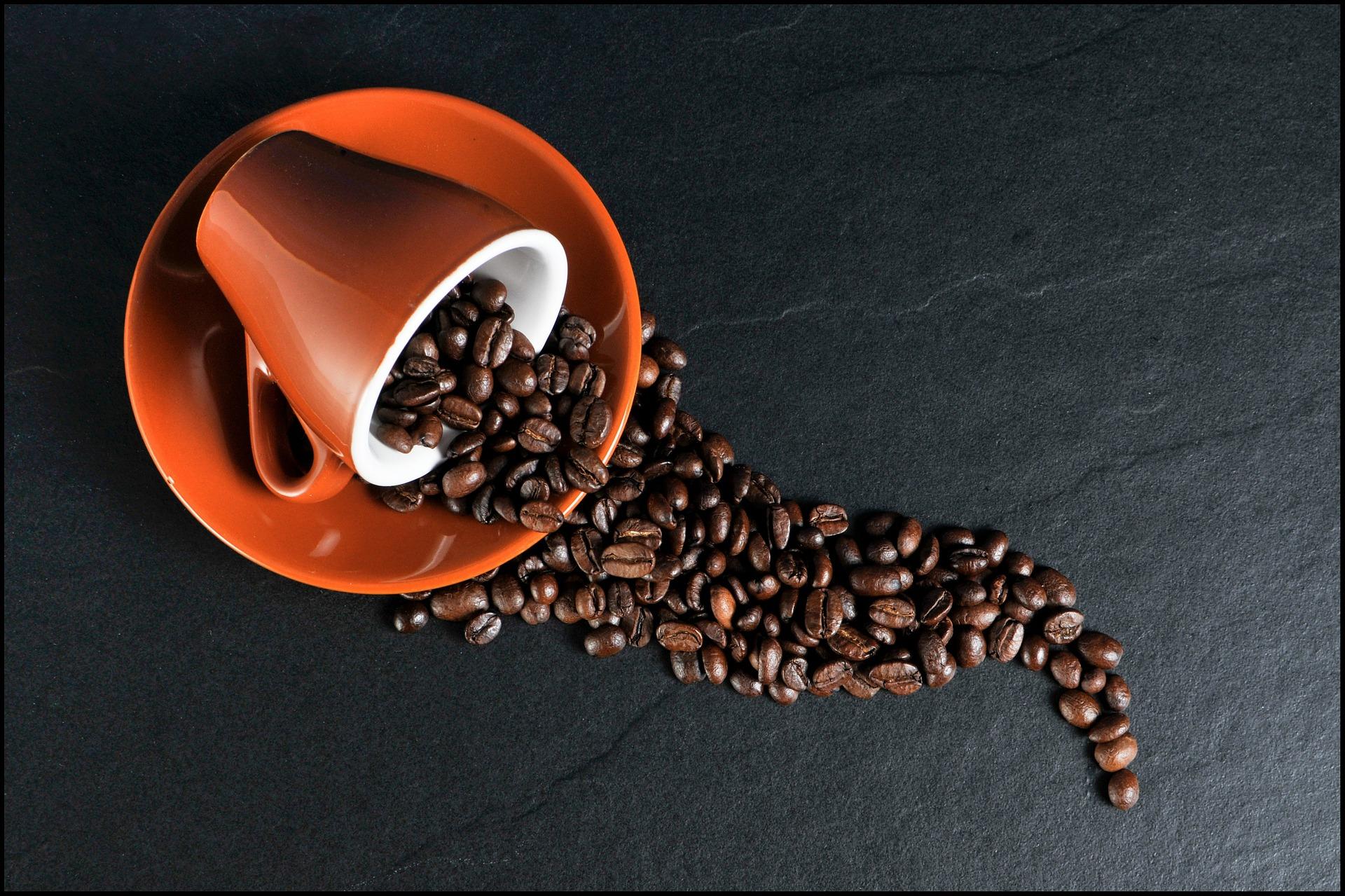 Étude Utilisateur – Café